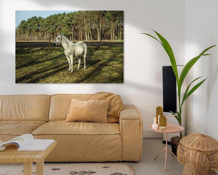 Sfeerimpressie: Het grijze paard heeft zijn oren opgezet van Norbert Sülzner