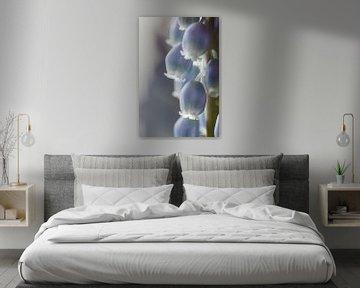 Blauw druifje von Bart van Dinten