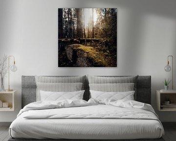 Herbstwald 003