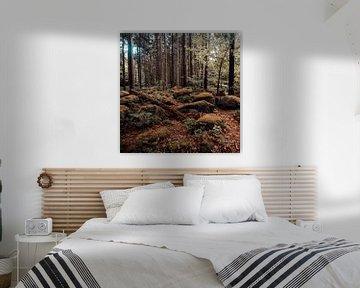 Herbstwald 001
