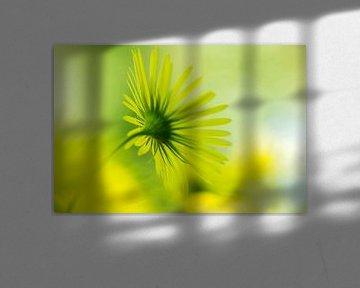 Yellow fantasy von D. Henriquez