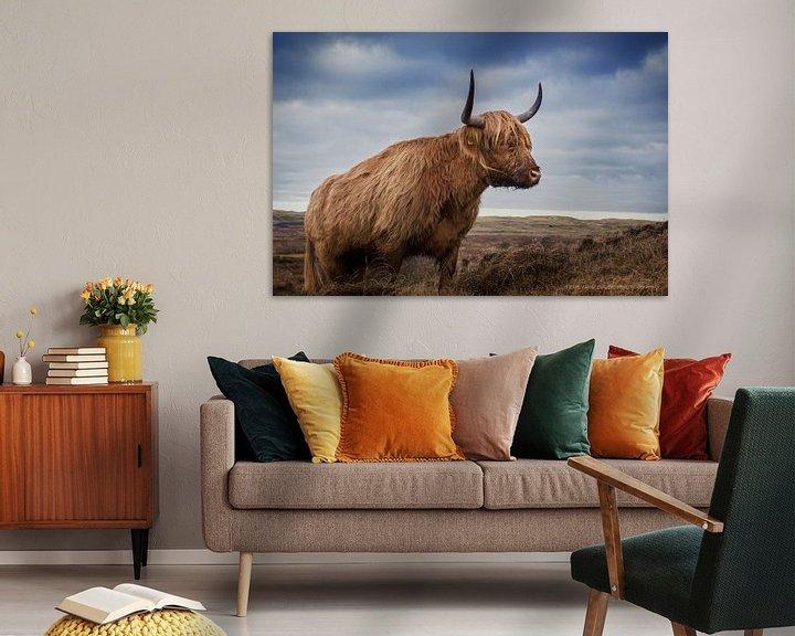 Sfeerimpressie: Schotse Hooglander in de duinen van Texel van Teus van Keulen