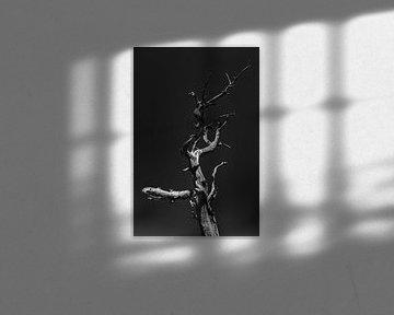 Dorre boom in Bryce Canyon van Jack Swinkels