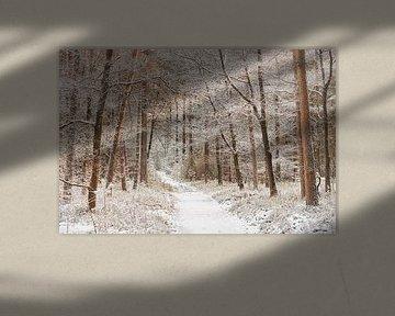 Chemin d'hiver à travers la forêt de la Veluwe sur Cor de Hamer