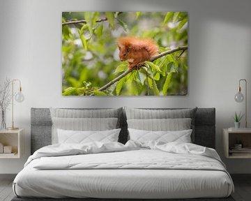 Eichhörnchen Portrait