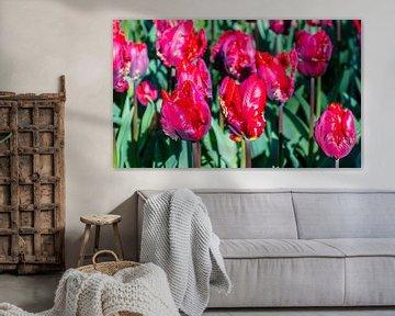 Rode Tulpen von Hans Verhulst