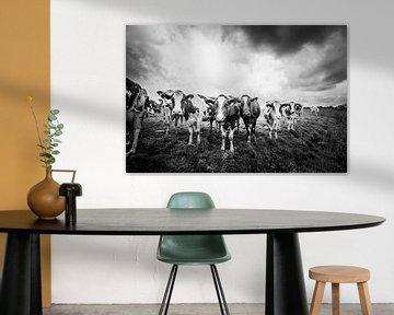 Koeien in de regen, Zoeterwoude 22-09-2018 von Jordy Kortekaas