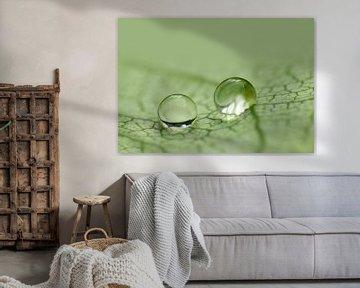 Rainy Day (Twee druppels) van Caroline Lichthart