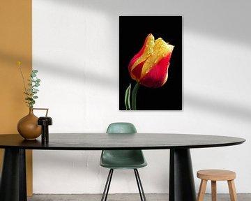 Gelbe und rote Tulpe von Ioana Hraball
