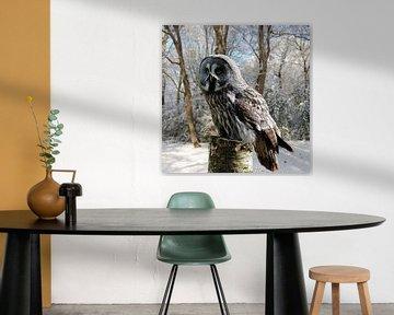 grey-owl-snow-forest von H.m. Soetens