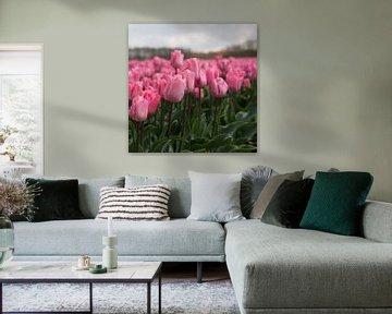 Roze tulpenpracht van Monique Hassink