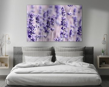 Lavender van Violetta Honkisz