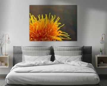 Saffloer oranje bloem von Margreet van Tricht
