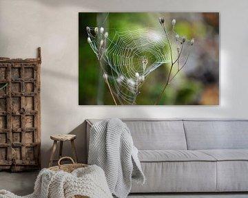 Die Spinne in seinem Netz von Yrla Lucassen