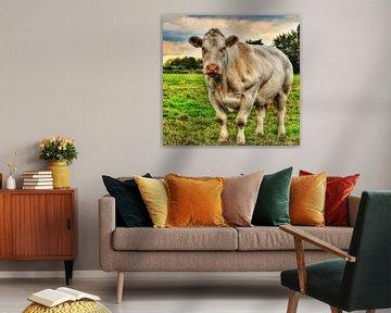 De gespierde koe. van Mariska Brouwenstijn