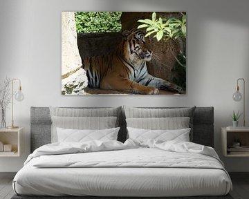 Bengaalse tijger von Bart Cornelis de Groot