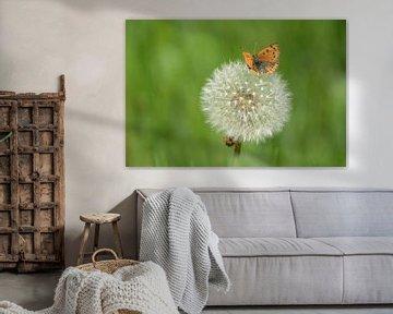 Kleine vuurvlinder op paardenbloem von Klaas Dozeman