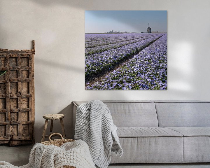 """Sfeerimpressie: Windmolen O-T met een bollenveld met paarse Anamone Blanda, """"t Zand, , Noord-Holland van Rene van der Meer"""
