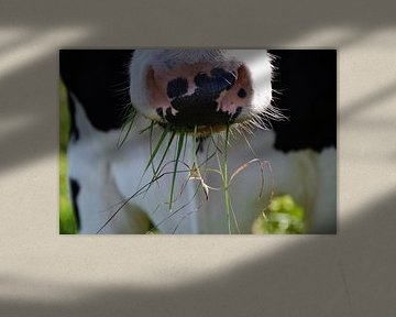 Koe eet gras von The Dragonfly