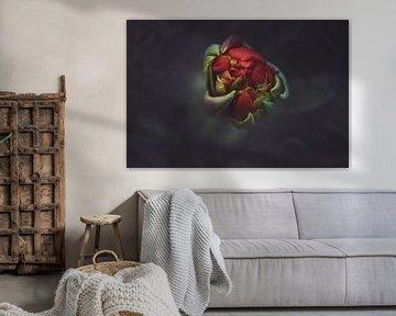 Macro Red Tulip von Marina de Wit