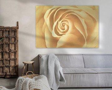 Rose von Marianne Twijnstra-Gerrits
