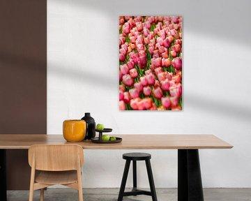 Tulpen meer von Marco Willemsen