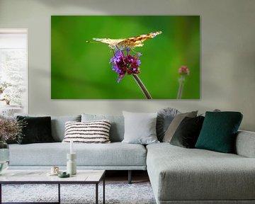 Schmetterlingsfeste auf einer Blume von Masselink Portfolio