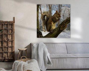 squirrel snow forest