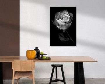 Rose von Peter van Nugteren