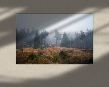 Nebel im Wald van Alena Holtz