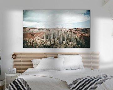 cactus landschap von Jonathan van Rijn