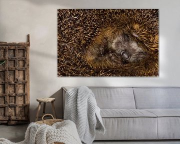 Europese Egel,  Erinaceus europaeus van Beschermingswerk voor aan uw muur