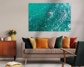Een spiraal van vissen van Jonathan van Rijn