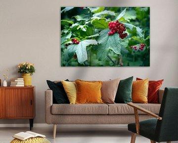 Saftige rote Beeren von Helga Novelli