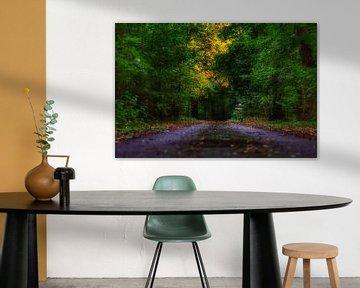 Het duistere pad in de bossen tijdens de start van de herfst. van Mariska Brouwenstijn