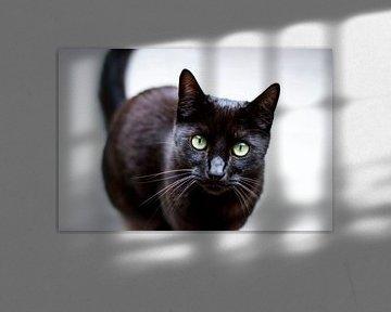 Zwarte kat gele ogen von Jeantina Lensen-Jansen