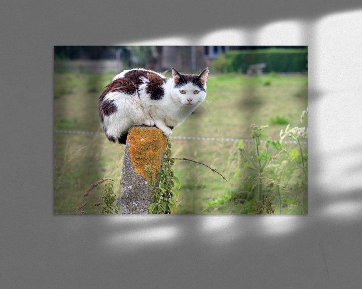 Impression: Zwart witte kat op een paal sur Dennis van de Water
