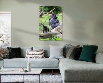 Kleine Gorilla met zijn vader van Dennis van de Water