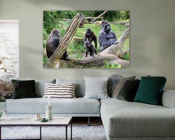 Gorilla familie met vader en zoon van Dennis van de Water