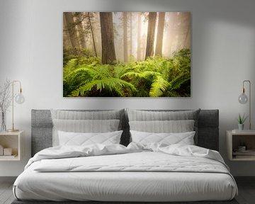 Redwood magic van Edwin Mooijaart