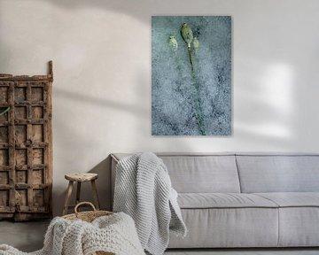 Blume gefroren oder nicht 2 von Wim van Ooijen