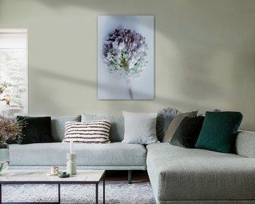 Blume gewachst 2 von Wim van Ooijen