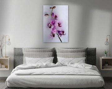 Blume gewachst 1 von Wim van Ooijen