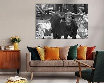 buffel van Bart Cornelis de Groot