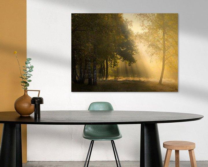 Sfeerimpressie: Prachtig gouden licht in het bos van Jos Pannekoek