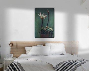 Belladonnalelie von Carina Stroo Cloeck