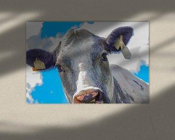 Koeien dieren van Sjirk Nieuwenhuis