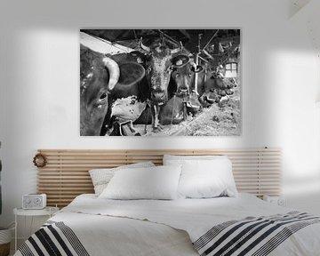De oude Koeienstal van Ton Tolboom