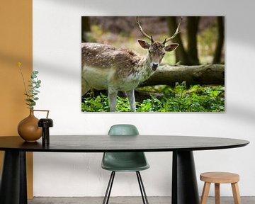 A wild Bambi von Yarik Flik