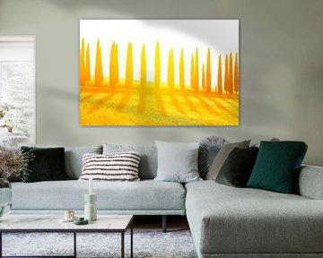 Cypressen laan bij zonsondergang sur Rens Kromhout